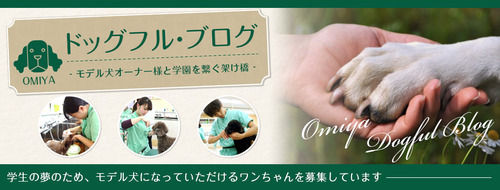 blog_head-omiya.jpg
