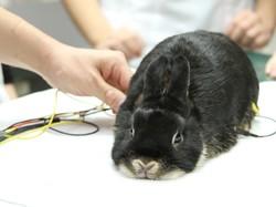 ウサギの心電図検査.JPG