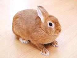 ③ウサギ.jpg