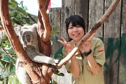 zoo-koalao2.jpg