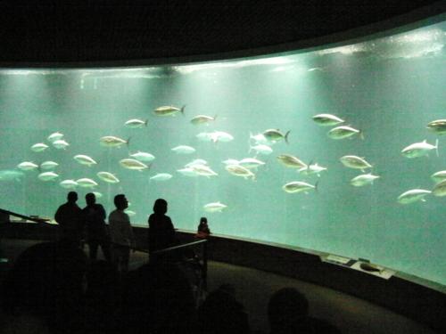 水族館5.png