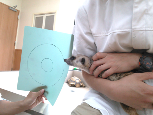 ミーアとカラー☆.png