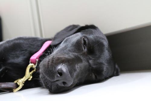 犬3.JPGのサムネール画像