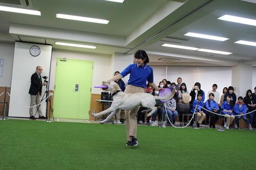 大宮1年ディスクドッグ.JPG