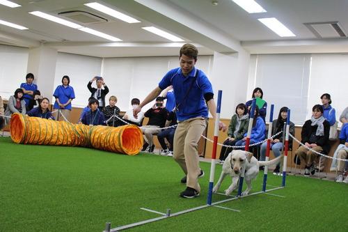 東京1年アジリティ2.JPGのサムネール画像