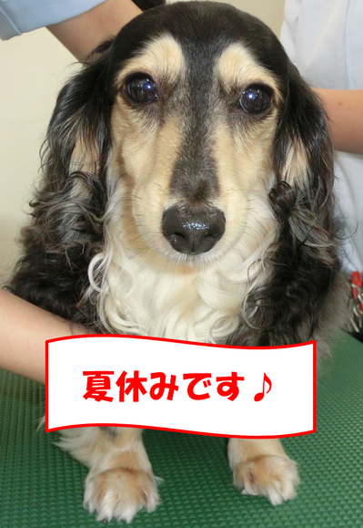 すみれちゃん夏休み.png
