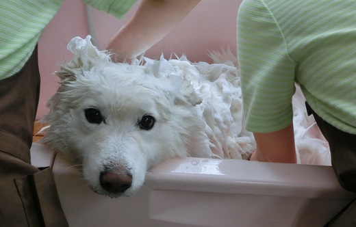 蓮、お風呂でうっとり.JPG