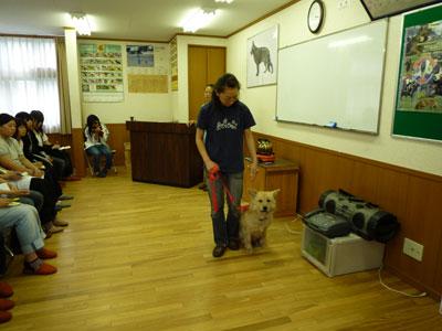 聴導犬訓練施設 聴導犬訓練施設 介助犬訓練施設 警察犬訓練施設 学校法人シモゾノ学園 大宮国際動